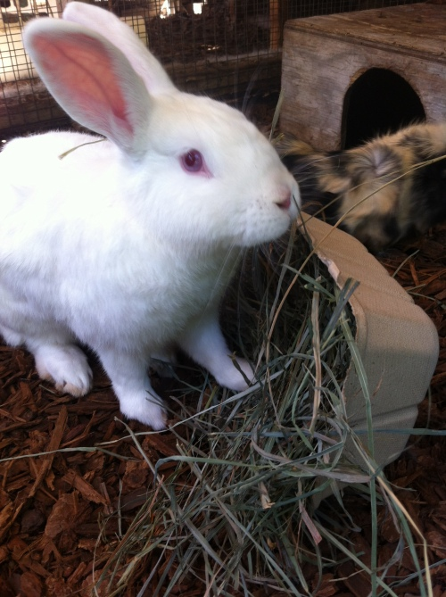 rabbit be green packaging
