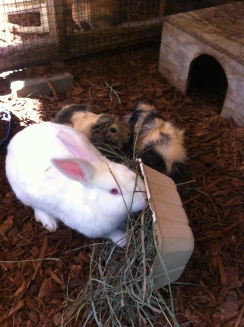 bunny be green utility tray